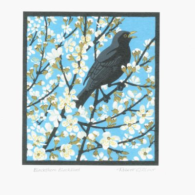 Blackthorn blackbird
