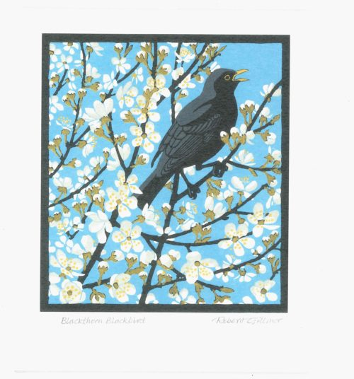 Blackthorn blackbird