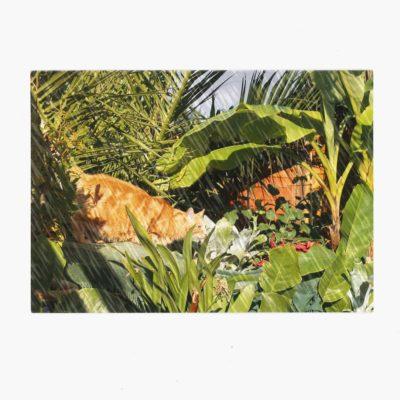 Tropical plants with Jasper