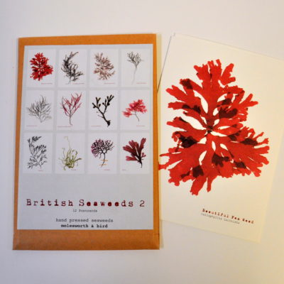 British seaweeds postcard pack 2