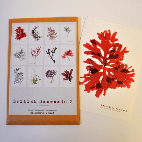 British seaweeds postcard pack 2