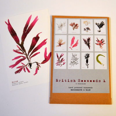 British seaweeds postcard pack 1